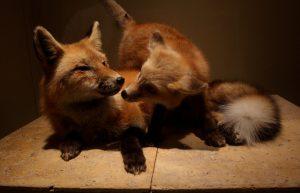 Cuki állatok és az endorfin