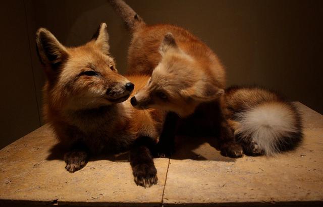 Cuki állatok és hatásaik
