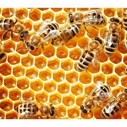 Itt van a méhkenyér!